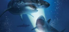 47 Meters Down never lets up – review